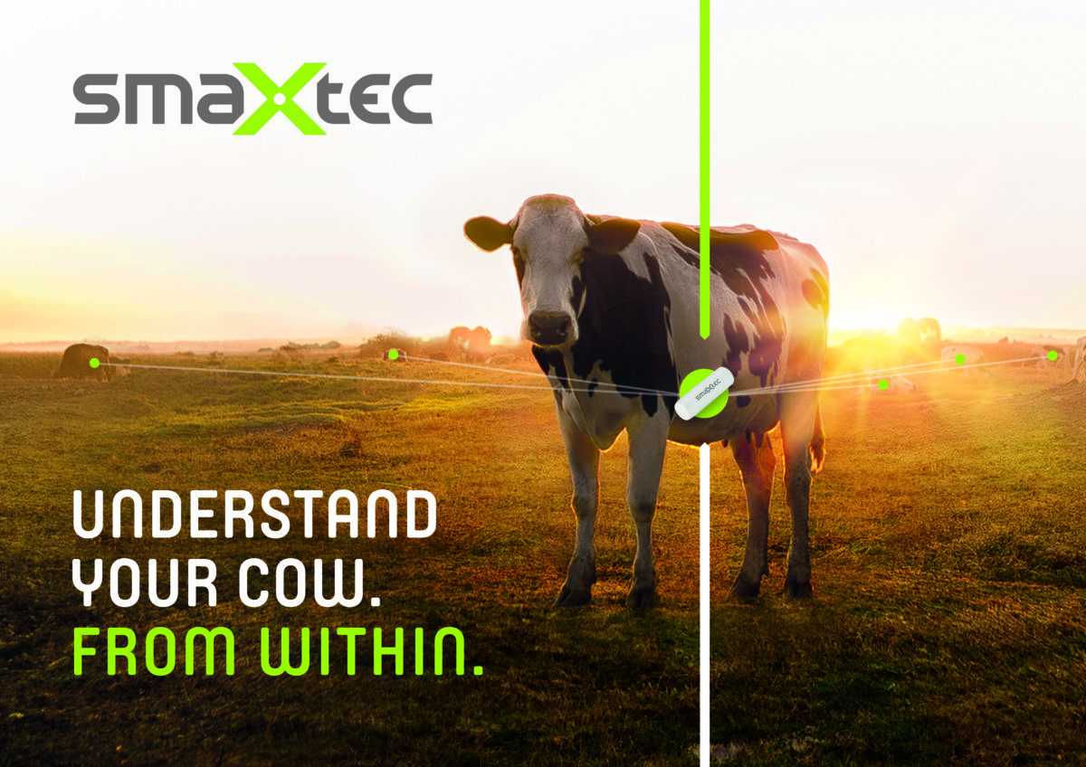 """cow standing on field with text written next to to: """"Understand your cow from withi"""""""